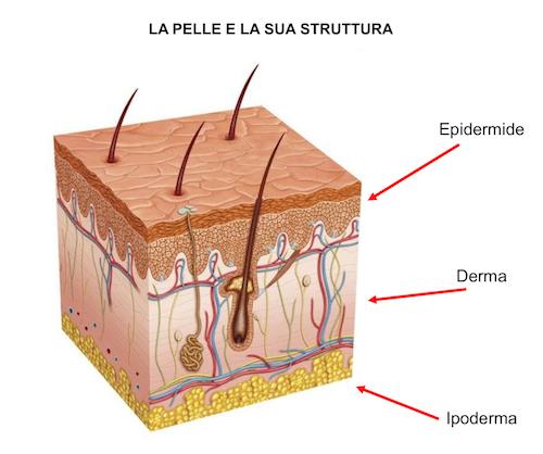 Come è fatta la pelle?